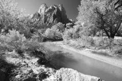 Afternoon Light, Zion  Royalty Free Stock Photography