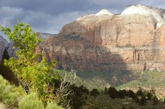 Afternoon Light, Zion Stock Images