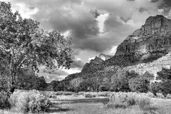 Afternoon Light, Zion  Stock Photo