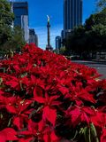 Afternoon in mexico city christmas time royalty free stock images