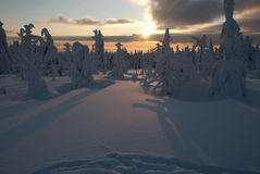 Afternoon at Orlicke Hill. Trail Sedivacek's long dogsled race Royalty Free Stock Photos