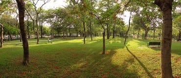 Afternoon Park Panorama Stock Image