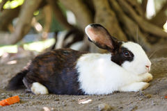 Afternoon rabbit relax in garden Royalty Free Stock Images