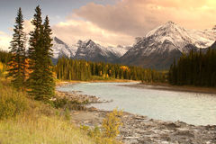 Afternoon in The Rockies. Athabasca river running through the Canadian rockies royalty free stock photo