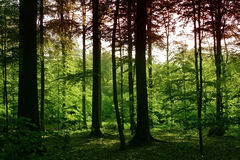 Afternoon in the sonian forest Royalty Free Stock Images