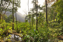 Afternoon sun illuminating rugged jungle landscape in Chiapas, M. Wide angle scenic landscape of hills and dense jungle vegetation under hazy afternoon sun in stock images