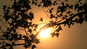 Afternoon sun shines on the trees. The afternoon sun shines on the trees stock video footage