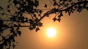 Afternoon sun shines on the trees. The afternoon sun shines on the trees stock footage