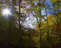 Afternoon sun through trees in fall stock photo