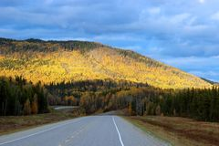 AFTERNOON SUNLIGHT ON YELLOW FALL FORREST HILLSIDE AND ROAD. Afternoon sun shining brightly on Hillside with vibrant yellow and green fall forrest colours Royalty Free Stock Photos