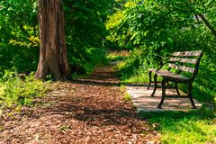 Afternoon sunlit path with bench. A path with green trees and plants with a bench in the afternoon sun in Lincoln Park Chicago near North Pond stock images