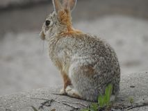 Afternoon Tea with Mr. Hare. Afternoon  tea  hare rabbit bunny nature wildlife stock photos