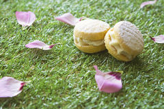 Afternoon Tea party biscuits on grass. Close up of biscuits on grass with flower petals scattered at a tea party Stock Photos