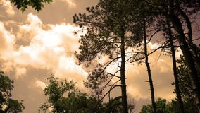 Afternoon Timelapse of clouds rolling by tall conifer trees in nature park at dusk ALT.  stock footage