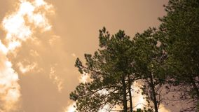 Afternoon Timelapse of clouds rolling by tall conifer trees in nature park at dusk.  stock video footage