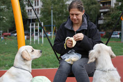 Afternoon woman with dogs at the playground. Woman is sitting on a swing while her dogs are watching at the banana Royalty Free Stock Photo