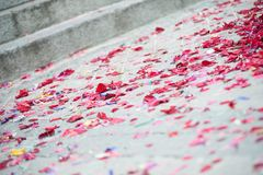 Afterparty ground. Some flowers lying on the ground in a weeding royalty free stock photo