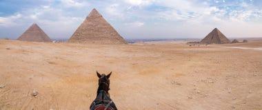 Aftonöken och Giza pyramider med en häst på förgrund, inga turister, nära Kairo, Egypten royaltyfria foton