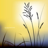 Afton för naturlig bakgrund för vektor Gräset på bakgrundsnollan Royaltyfri Fotografi