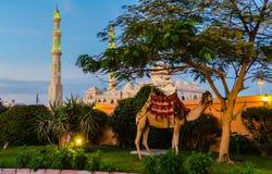 Afton i Hurghada egypt Arkivbild