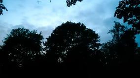 Afton i skog Royaltyfri Bild