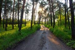 Afton i skogen Arkivfoto