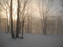 Afton i vinterskogen Arkivfoton