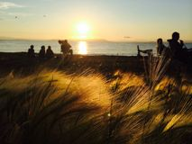 Afton med vänner på stranden Arkivfoton