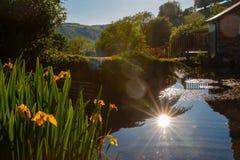 Afton på ett Exmoor damm royaltyfri fotografi