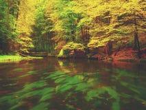 Afton på floden i ljusa höstfärger Fuktighet i luft efter regnig dag Royaltyfria Foton
