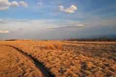 aftonen gräs bergskuggor Arkivbild