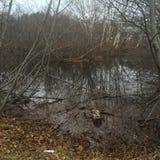 Aftonen i vattenfågel parkerar Royaltyfri Bild