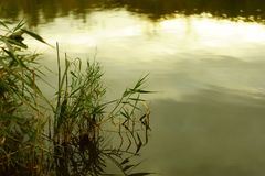 Aftonhimlar reflekterar på vattnet Royaltyfri Bild