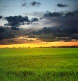 Aftonhimmel och äng Fotografering för Bildbyråer