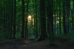 Aftonlandskap i skogen Royaltyfri Bild