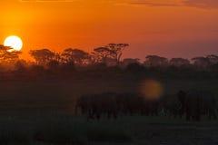 Aftonlandskap med elefanter uteliv Royaltyfria Bilder