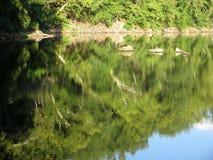 Aftonlandskap på Widewater på C&O-kanalen royaltyfria bilder