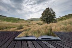 Aftonlandskapbild av Llyn y Dywarchen sjön i höst i Sn Royaltyfri Foto