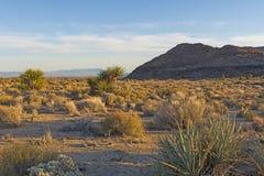 Aftonljus i Mojave?knen royaltyfri bild