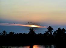 Aftonljus och fåglar som tillbaka flyger till redet Fotografering för Bildbyråer