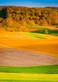 Aftonljus på lantgårdfält i lantliga York County, Pennsylvania fotografering för bildbyråer