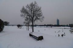 Aftonlynne på Donauen i Wien Royaltyfria Bilder