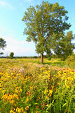 Aftonprärie i Illinois Royaltyfri Fotografi