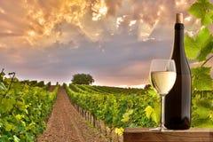 Aftonsikt av vingårdarna Arkivfoto