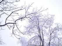 Aftonsikt med träd i en första snö på en grå himmel Royaltyfri Fotografi