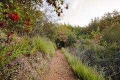 Aftonsikten av den fotvandra slingan i det villaMontalvo länet parkerar, Saratoga, södra San Francisco Bay område, Kalifornien arkivfoton