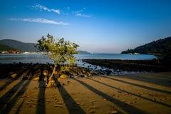 Aftonskuggor av palmtrees på havet seglar utmed kusten Arkivfoton