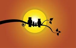 Aftonsol, trädblad- & apelsinhimmel och ugglafamiljkontur Royaltyfri Foto