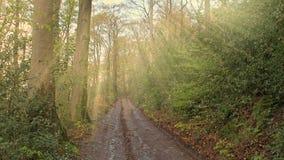 Aftonsolljus skiner till och med träd till en skogväg i Tyskland arkivfilmer