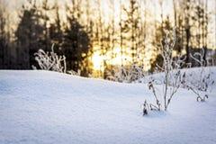 Aftonsolnedgång i vinter Arkivbild